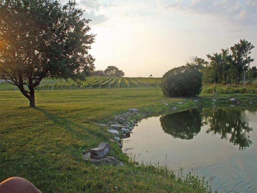Le vignoble au coucher de soleil