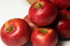Verger Yvan des pommes
