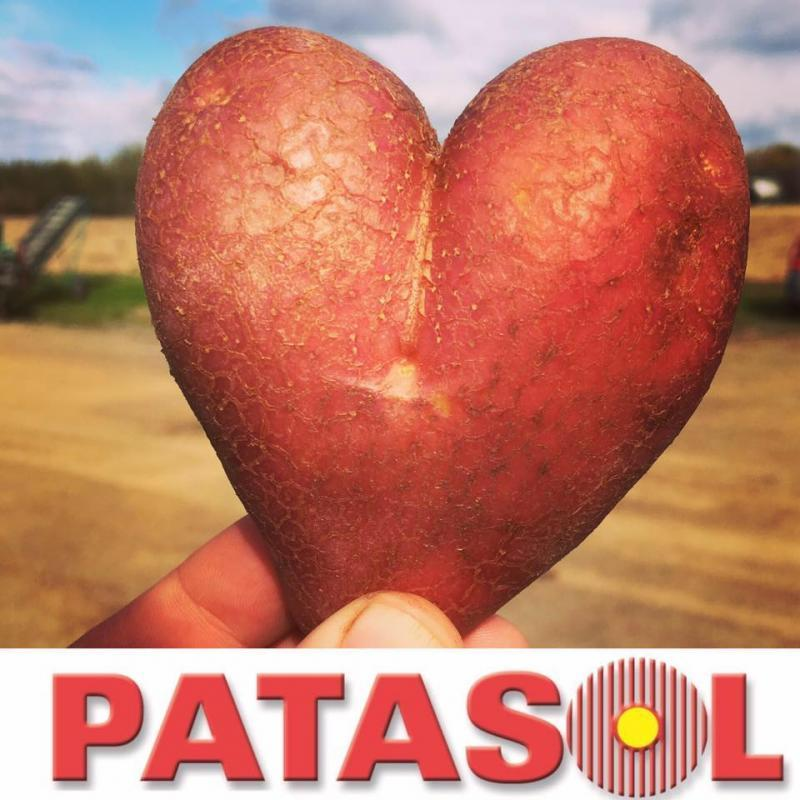 Patasol