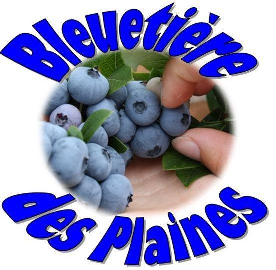 Bleuetière des Plaines